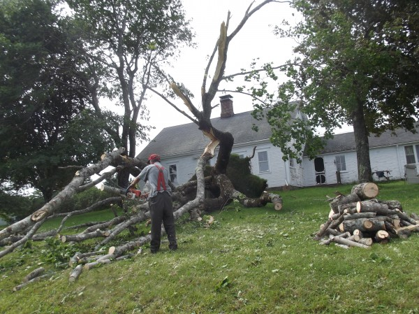 Harold Crosby of Whiting uses a chain saw to cut up tree that fell away from his home along U.S. 1 on Saturday morning. &quotI'd like to know how strong the wind was,&quot he said.