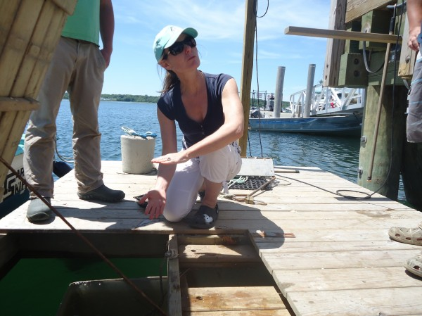 Abigail Carroll, of Nonesuch Oysters, is a leader in oyster tasting tours and aquatourism in Maine. Here she shows guests her floating nursery.