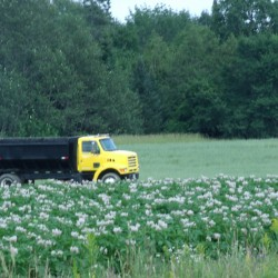 'Quality crop' being harvested in Aroostook County potato fields