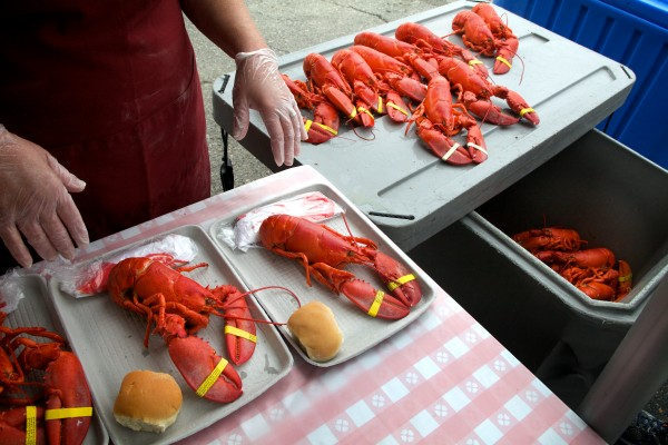 Lobsters are paired with rolls at the 67th annual Maine Lobster Festival in Rockland on Wednesday before corn and other goodies are added to the trays.
