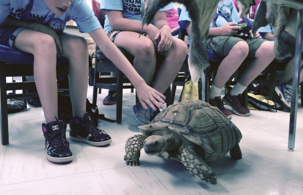 "Gunther,"" an 11-year-old tortoise that was adopted after it was abandoned by Sgt. 1st Class Adam Farrington, who helps rehabilitate injured or abandoned animals."