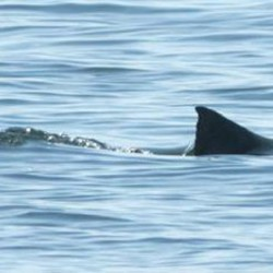 'Shark Week' in Maine includes sightings, catches, and possibly a great white