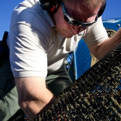 Researchers look at growing arctic surf clams in tidal flats