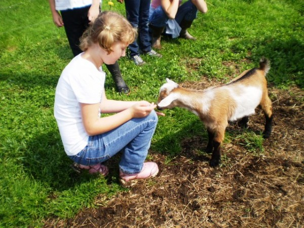 Making Friends with the Baby Goats at Summer Camp