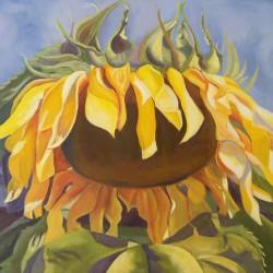 Sunflower by Pam Koach
