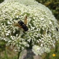 Cultivate a habitat for beneficial insects