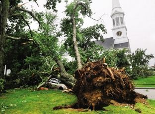 A large tree some say is about 150 years old came down on two vehicles parked near the First Parish Church during a harsh storm that whipped through York on July 15.