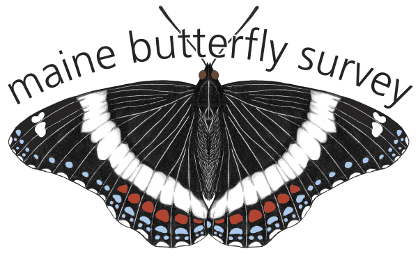 The Maine Butterfly Survey logo