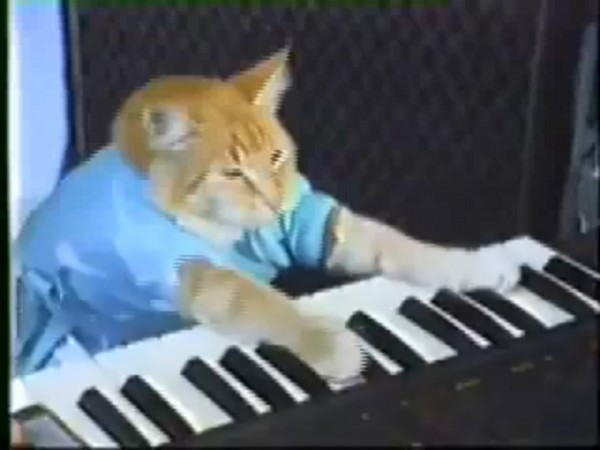 Keyboard Cat, Grumpy Cat and Henri, le Chat Noir are just some of the cat celebrities that will be featured in the Internet Cat Video Film Festival, set for Aug. 23 at the Farnsworth Art Museum in Rockland.