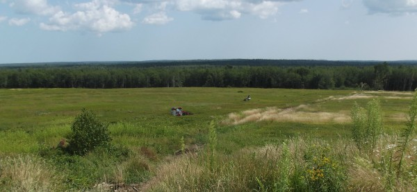 A man in the distance uses a walk-behind mechanical harvester to gather blueberries on a barren in Columbia.