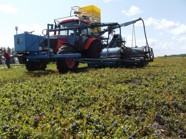 Tractor and mechanical raking equipment at work harvesting wild blueberries for Cherryfield Foods on a blueberry barren in Columbia. At far left is David Bell, general manager of Cherryfield Foods.