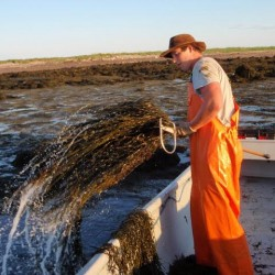Seaweed surcharge hearing draws few people