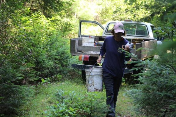 Brenda White of LaGrange carries bear bait on July 29 to a bait site located on timberland near Lincoln used by Mid Maine Outfitters, which is owned by her husband, Troy White.