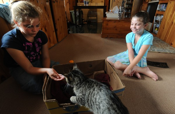 Julieanna Spaulding (left) and her sister, Brianna Spaulding, play with their cat, Jasper, which recently had four kittens at their home in Belfast.