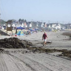 Invasive seaweed species spotted on Maine coast, poses threat to lobstermen and beachgoers