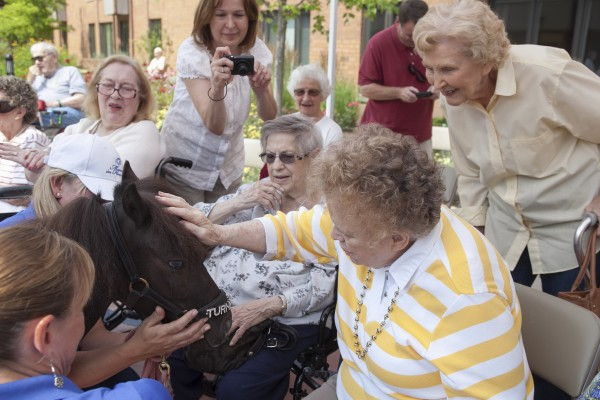 Residents of the Friendship Village retirement home pet a miniature horse called Turnabout while others observe on July 19, 2014, in Schaumburg, Illinois.