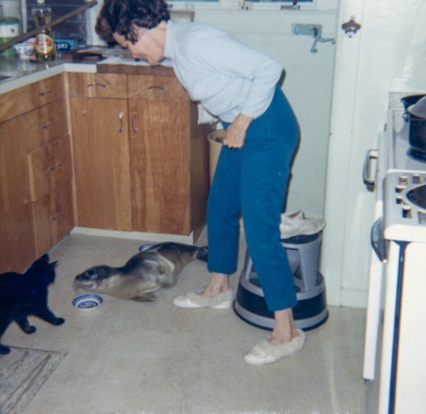 Thalice Goodridge in her kitchen in 1961 with the orphaned baby harbor seal her husband, Harry Goodridge, adopted.