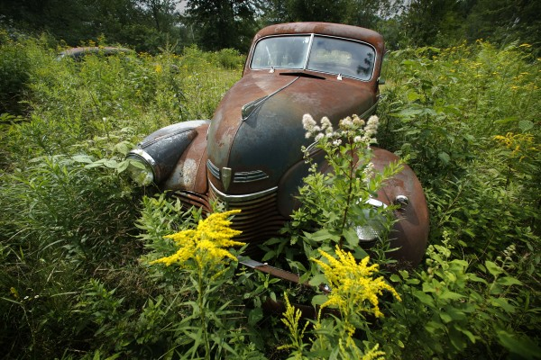 Weeds and wildflowers surround the same old Chevy in this photo taken in West Bethel, Maine.