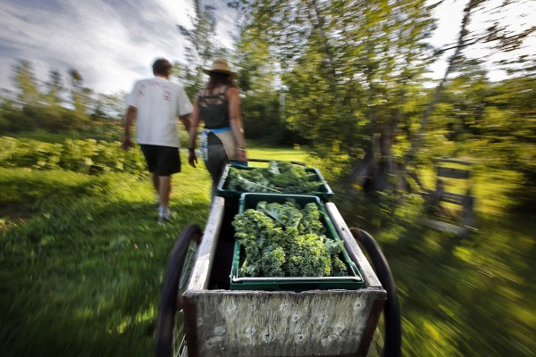 Hannah Semler (right), with Mike Macfarlane, pulls a cart full of kale gleaned at Pat and Mike's Garden in Ellsworth.