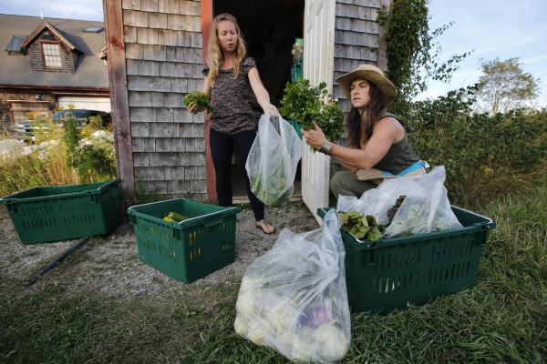 Hannah Semler (right) and Soshona Smith package produce donated to Healthy Acadia by the Beech Hill Farm in Mount Desert.