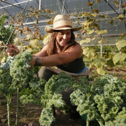Hannah Semler, gleaning coordinator for Healthy Acadia, picks kale at Pat and Mike's Garden, a small farm in Ellsworth.