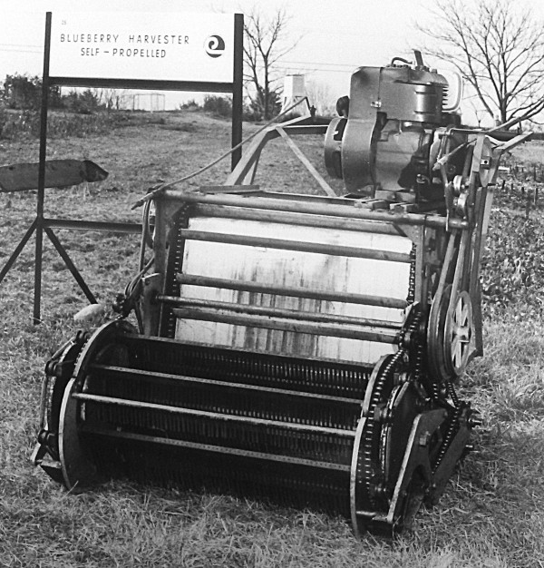 Self-propelled blueberry harvester.