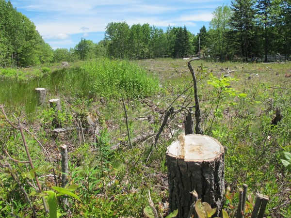 Emera Maine recently cleared this 3-acre lot on Woodbury Road in Bar Harbor but, after local residents objected, the company has put its plans to build a substation on the property on hold while it considers other options.