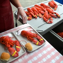Festival wraps up with lobster eating contest, diaper derby, codfish carry