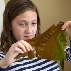 'It tastes slightly of the ocean': Portland school students test seaweed pizza
