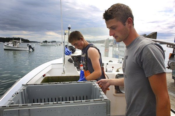 From left, Jake McGuire and Lance Bradshaw unload the lobster they caught recently at the Stonington Lobster Co-op dock.