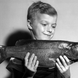 "Harry Rossignol, 8, of South Brewer, displays a 4-pound smallmouth bass that he caught at Chemo Pond in 1957. The young man hooked and landed the smallmouth on a red and white ""jitterbug"" bait."