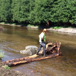 John Field inspecting a log jam during construction