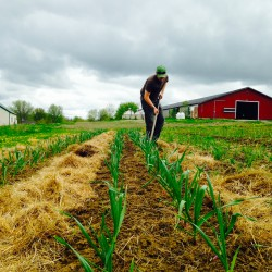 Enjoy Maine-grown food year round