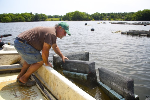 Oyster farmer Jesse Leach checks his oyster growing cages at his aquaculture facility on the Bagaduce River in Penobscot, Maine.