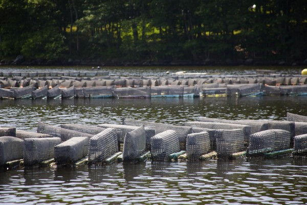 Oyster growing cages line the Bagaduce River in Penobscot, Maine. The number of aquaculture operations in the Bagaduce River has increased sharply in recent years, which has led to competing concerns between Penobscot residents who say it is having a negative impact and fishermen who say they need to earn a living.