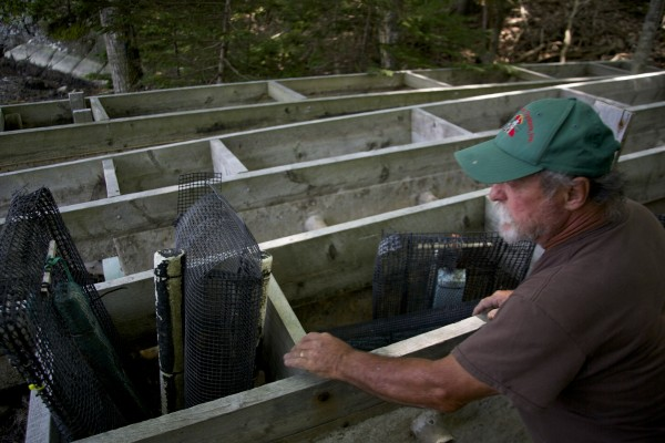 Oyster grower Jesse Leach shows his upweller used as a nursery for baby oysters.