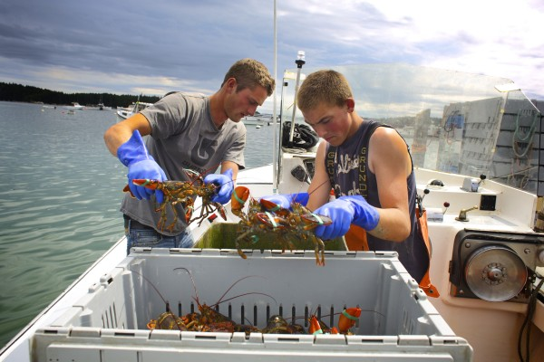 From left, Lance Bradshaw and Jake McGuire unload the lobster they caught on Aug. 15 at the Stonington Lobster Co-op dock. Bradshaw recently dropped out of the University of Maine during his first year with hopes of becoming an engineer. Bradshaw says he left because of the cost of school and feeling like he didn't fit in.