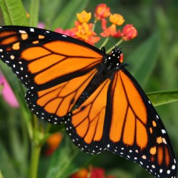 Transform the yard into a butterfly haven