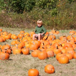 Child in the pumpkin patch