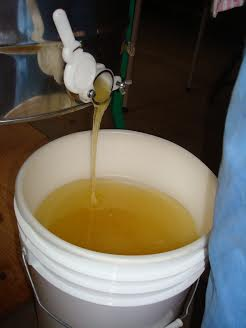 Honey flows from the extractor.