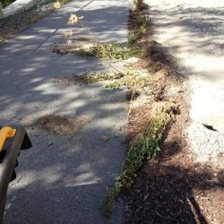 Damage done to Michaud Trail