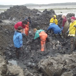 Volunteers work in a shallow hole on Saturday to unearth and recover the bones of a finback whale that was stranded and buried on Mowry Beach in Lubec 20 years ago.