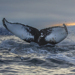 Intimate, 'old-school' whale watches foster 'deeper connectedness' between people, marine life