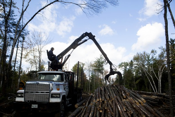 Tom Pelkey of Orland loads logs onto this truck Thursday in Blue Hill. Pelkey says he can't make a living hauling to Jay with his small truck once the Verso Paper mill closes.