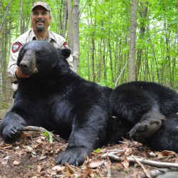 "Wildlife biologist Randy Cross, leader of the field crew for the Maine Department of Inland Fisheries and Wildlife's 40-year bear study, poses with ""Big John,"" a 432-pound black bear that was snared, weighed and released in Washington County on June 17, 2014. Cross first caught ""Big John"" four years earlier, in the exact same place."