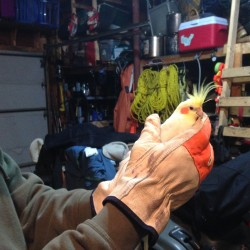 Greg Canders of Bangor holds what he believes to be a cockatiel he found in a tree in his front yard Friday evening in Bangor.