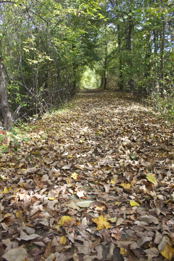 A layer of leaves cover the Old Narrow Gauge Volunteer Trail in Randolph in this October 2014 file photo. The trail follows a section of the old Kennebec Central Railroad.