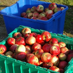 A program celebrating Maine's heirloom apple varieties will take place Saturday, Oct. 11, 11 a.m. to 5 p.m., at Woodlawn Museum, 19 Black House Drive (Surry Road), Ellsworth. For more information: (207) 667-8671.
