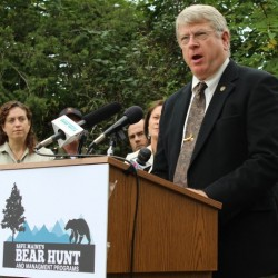 Watch the BDN and CBS 13 town hall meeting on Maine's bear baiting referendum