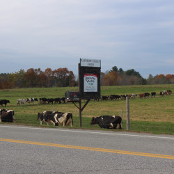 Pricing, record high costs for feed threaten to sink Maine's dairy farms